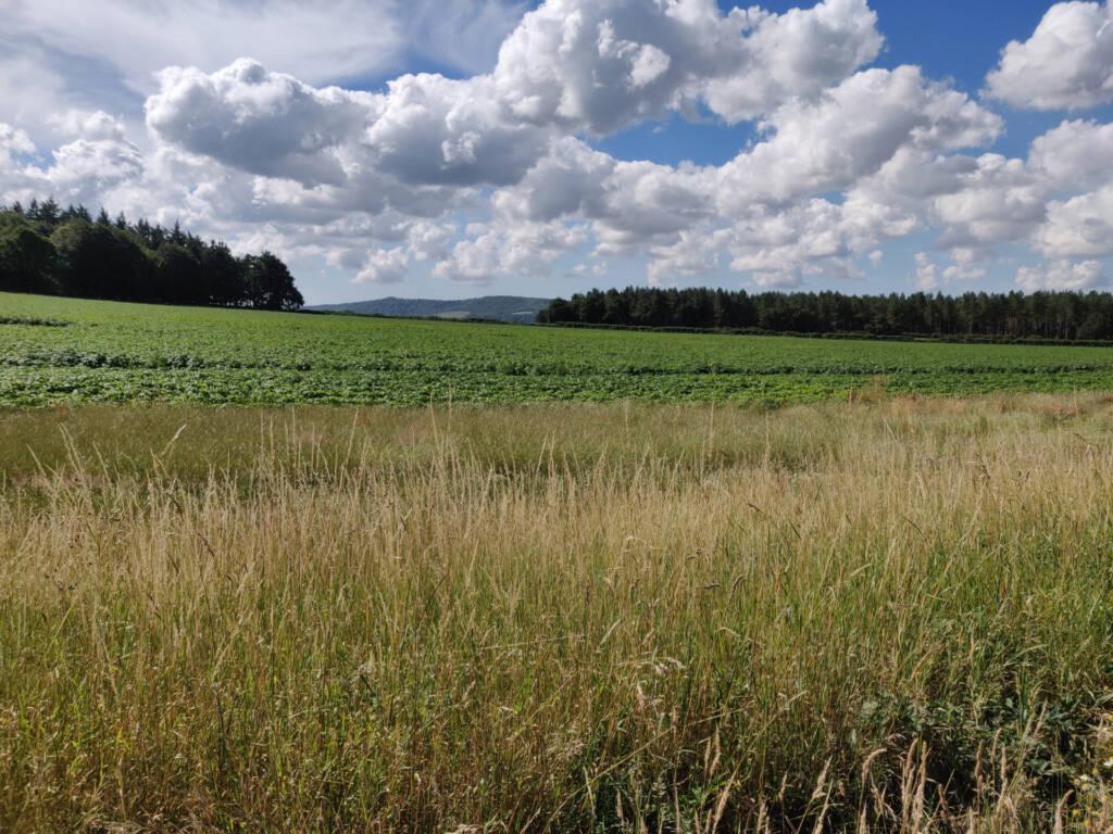 farm land near Borden.