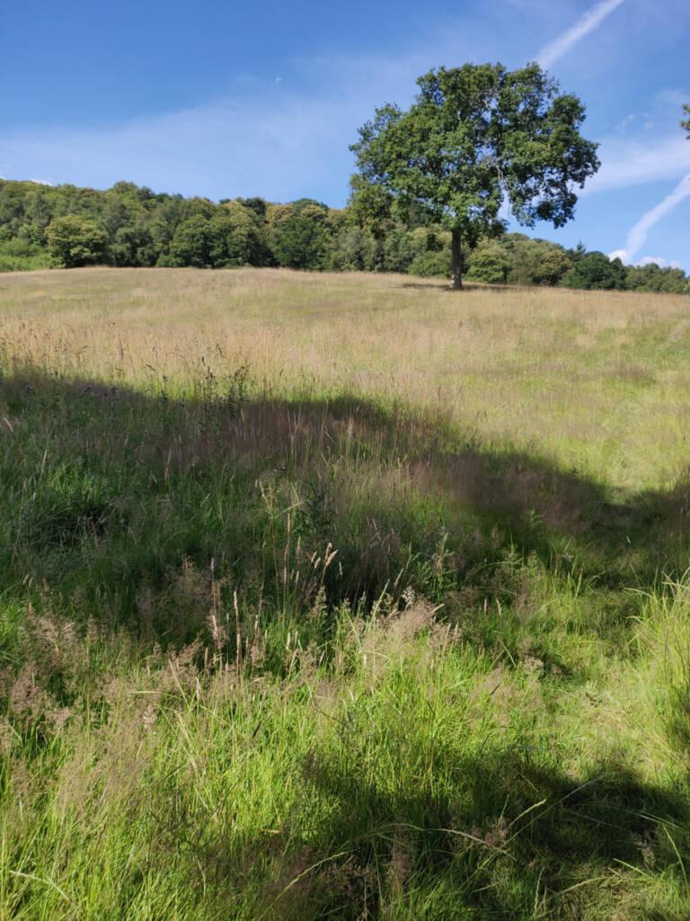 a grassy field heading up hill.