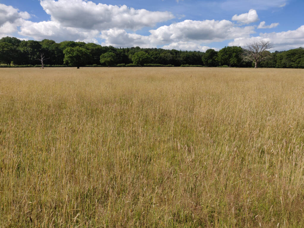 long grassy field.