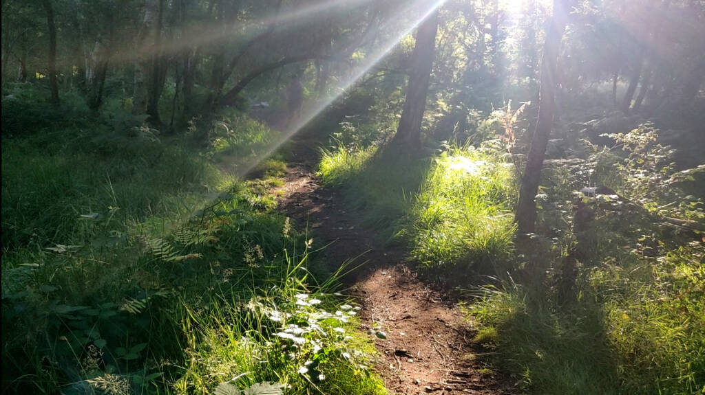 sun beams breaking through the tree line and leaves, illuminating the forest. Signs of a great trail run