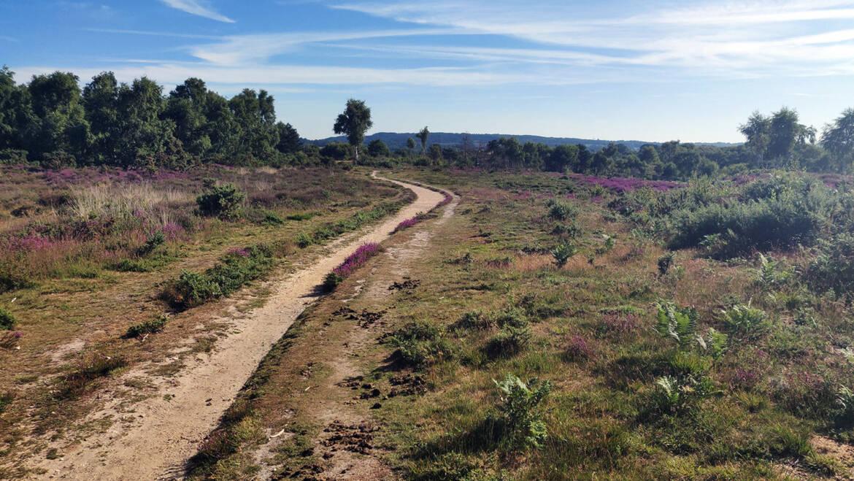 Hampshire, Serpent Trail Ultra marathon, August 2020