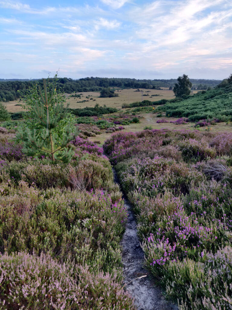 Signs of a great trail run - Heather and other wild flowers flowing down a hill into the landscape.