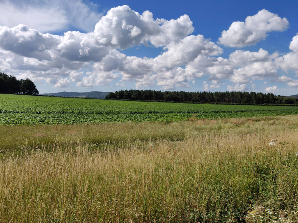 afternoon over a farm field with a trail running alongside it