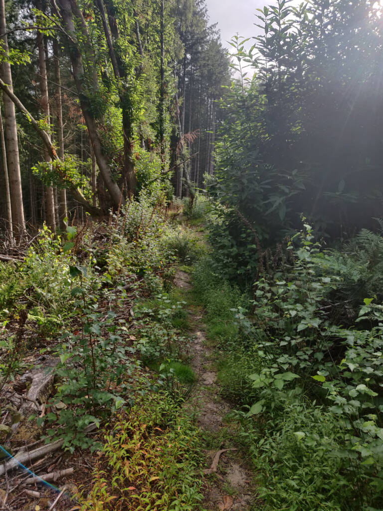 An overgrown trail through some forest.