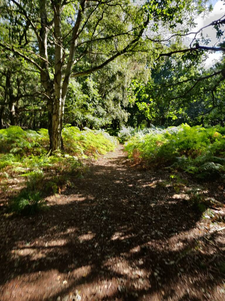 coastal trail running forest area near Dunwich in Suffolk.