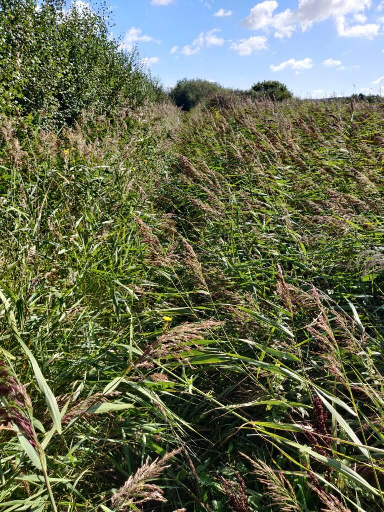 overgrown trail grasses