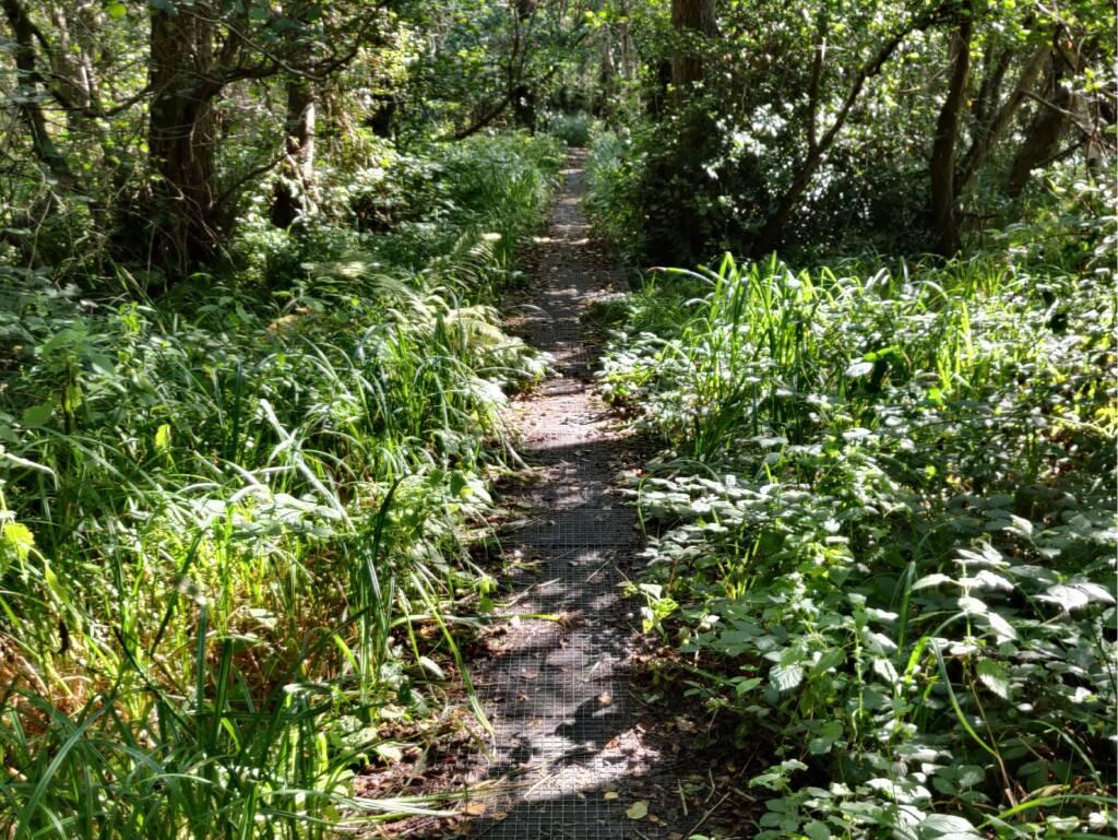 footbridge through marsh and forest.