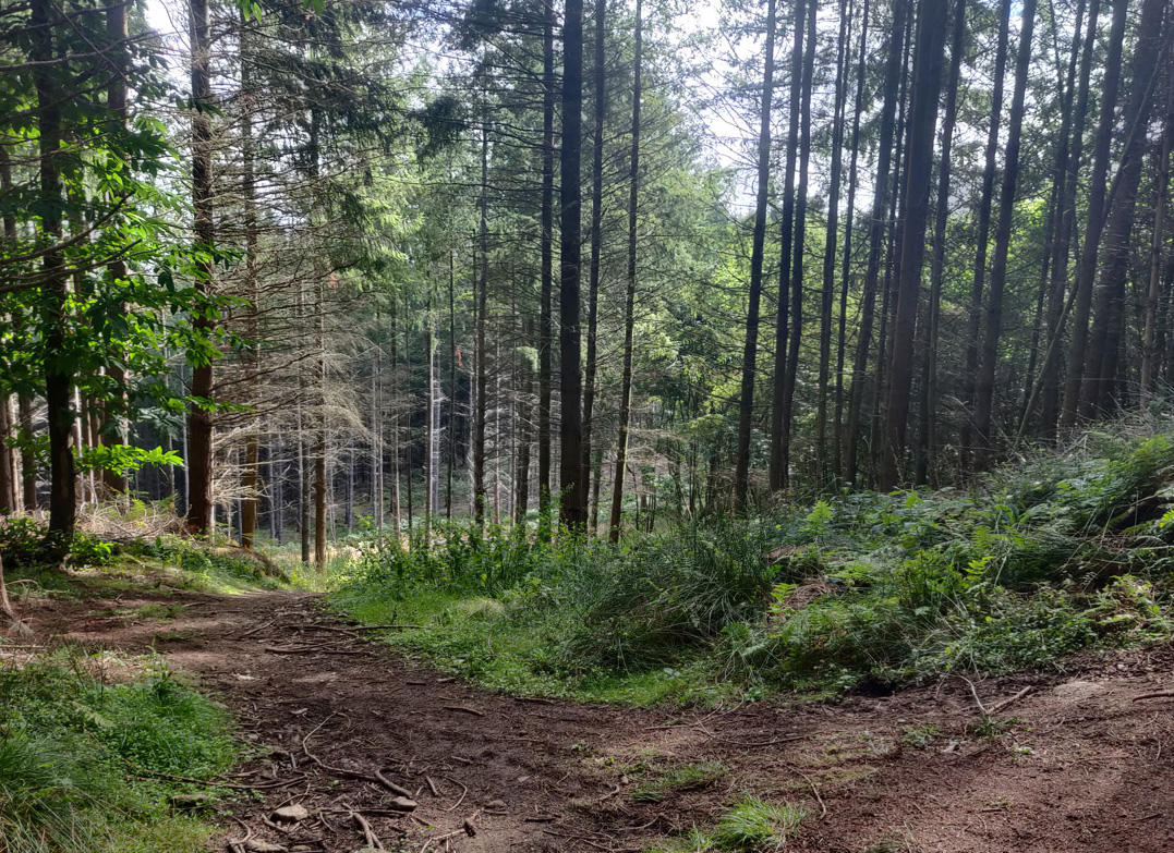 South Downs Ultra Trail Run Part 2 (61k)