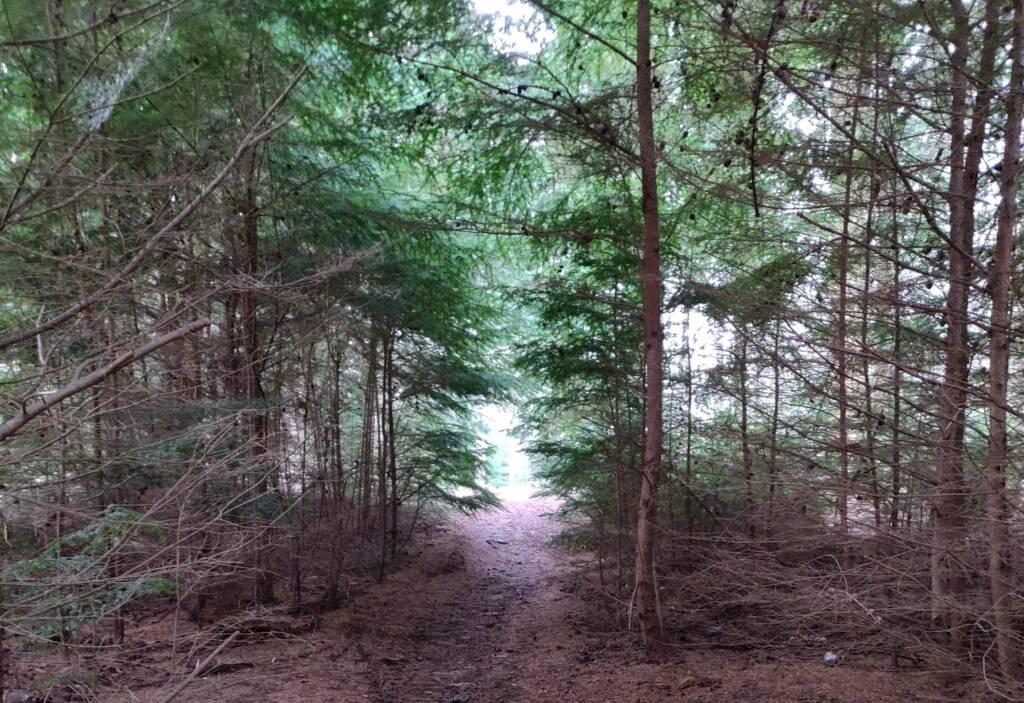 wild camp forest walk