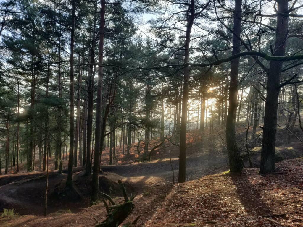 woodland at sunset
