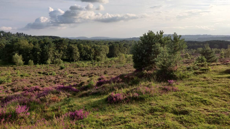 Summer Trail Running in England