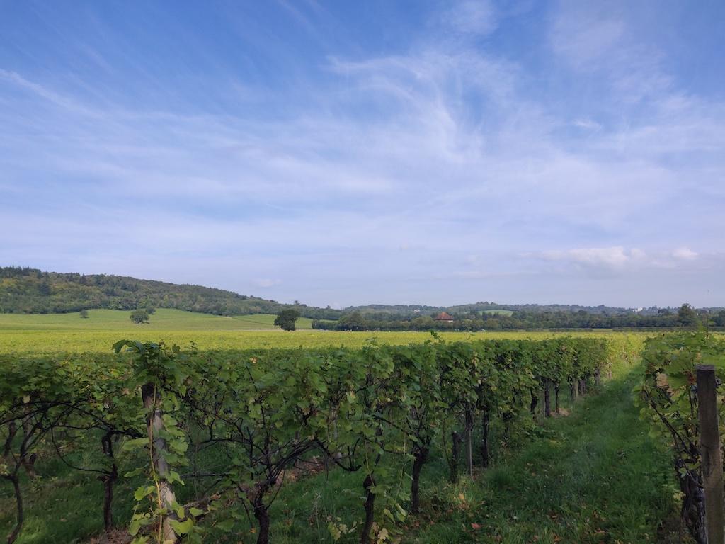 view across vineyard